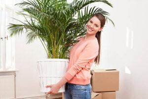 جابجایی گیاهان آپارتمانی در اسباب کشی